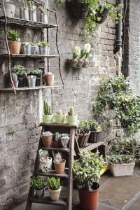 výživa rostlin